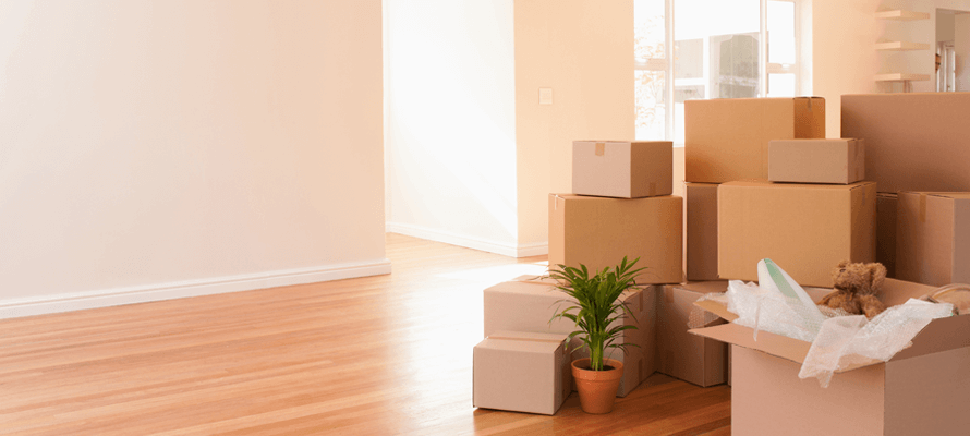 Packed moving boxes in living space with teddy bear and plant