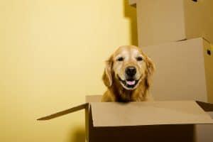 Dog in Moving Box - Hamilton, NJ - Rite Move